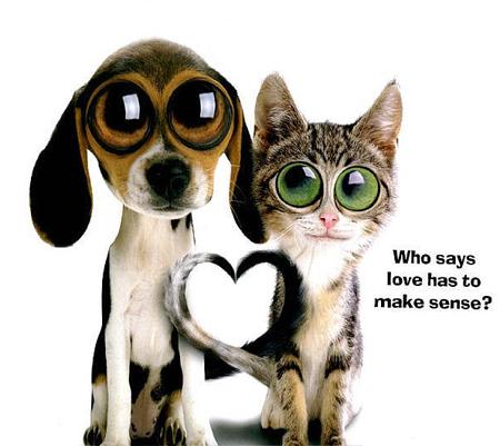 ��� ����� 2014,���� ��� �����,��� ����� 2014,���� ��� �����,funny photos 2014 cat-dog-love.jpg?w=5